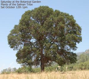 Plants of the Salinan Tribe